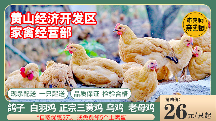 【休宁、屯溪送货上门】活禽现杀现送!三黄鸡、土公鸡、老母鸡,26元/只起、土鸡蛋自取0.75元/个!夏秋交替,一起来贴秋膘呀~